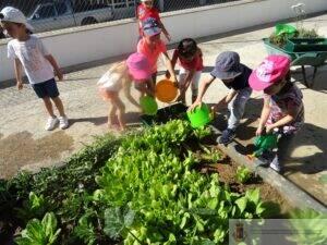 horta-biologica-pre-escolar (2)